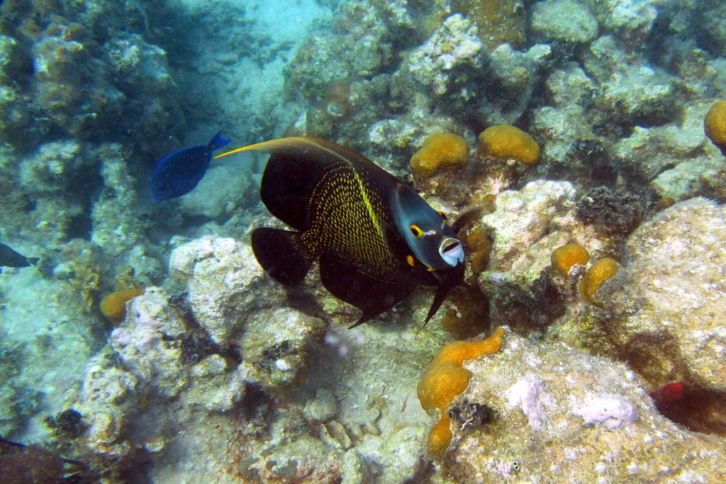 Unterwasser Gitti Insel Palmeninos 085